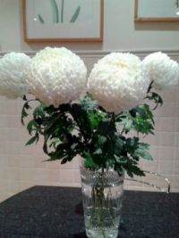 Chrysanthemums in a Vase  (1)