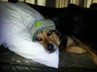 Four legged John Deere fan