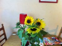 Sunflowers in my kitchen