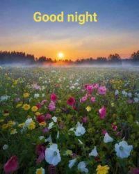 Dobrou noc a krásné sny