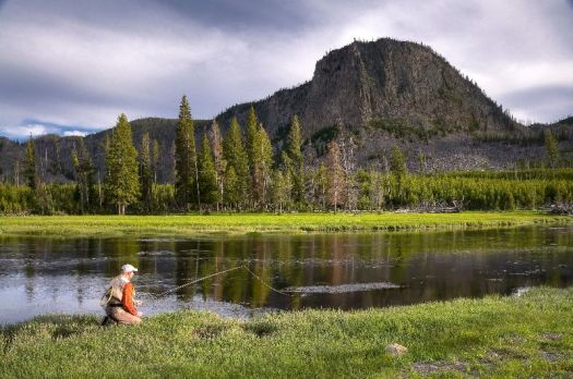 Fishing the Madison River, Yellowstone