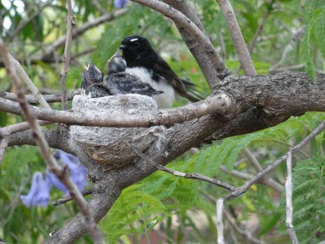 2nd nesting