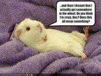 Poor.Guinea.Pig!!!!