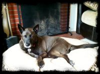 Stoli Relaxing in front of the fireplace!