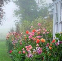 a spectacular foggy morning - chic shabby and french