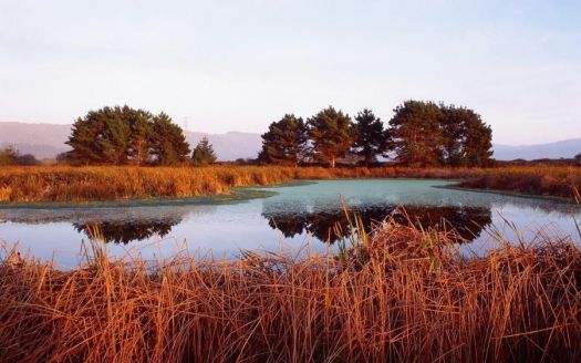 Red Reed Lake