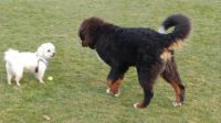 Back off Wallace...no you can't have my ball !!
