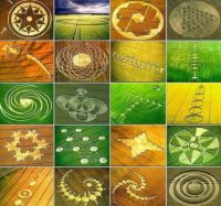 crop circle collage