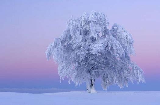 tree in ice