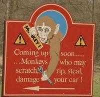We can skip the monkeys you know.