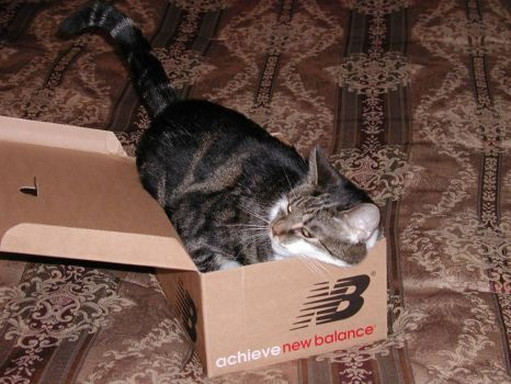 What's this...A cat in the box...