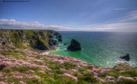 spring-flowers-cliffs-cornwall