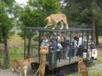 Wildlife Park - Christchurch, New Zealand