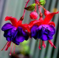 garden 003-