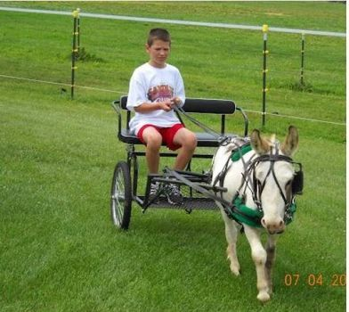 PJ the mini donkey..... He drives!