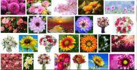 Glorious Flowers