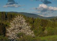 Máj v podhůří Jeseníků_May in the foothills of the Jeseníky Mountains