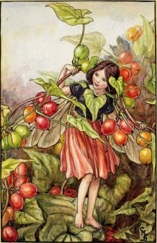 The Black Bryony Fairy (smaller size)