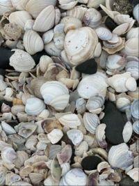 Shell beach NZ