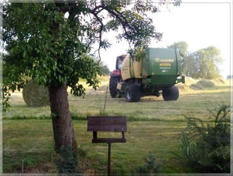 Sklizeň sena  -  Hay harvest