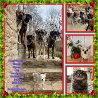 Canine plus One Christmas