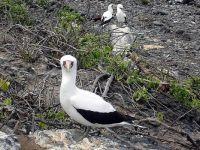 Galapagos_Birds