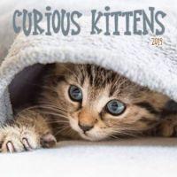 2019 Wall Calendar Curious Kittens