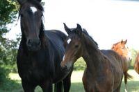 IMG_2193-Tamara-foal