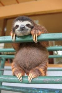s-the-happiest-baby-sloth