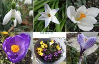 Another Spring collage