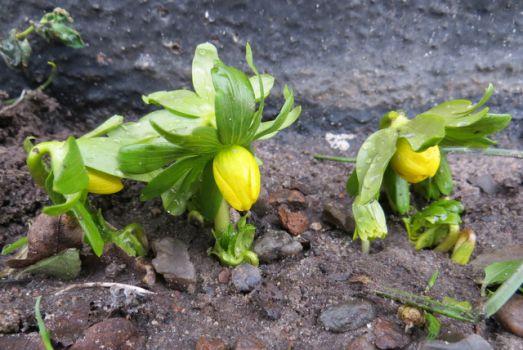 spring- flowers