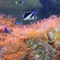 Anemone tank at Ocean Journey