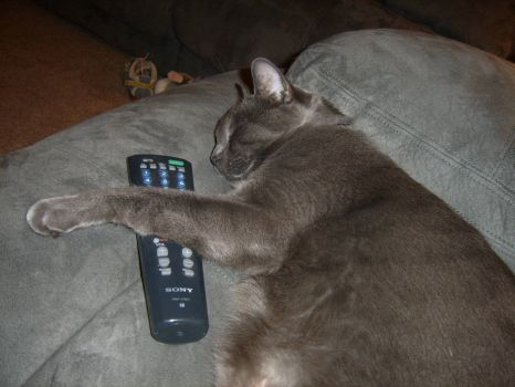 Asleep on the Sofa with the Remote...?