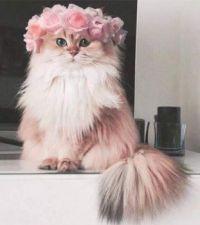 Don't I Look Beautiful