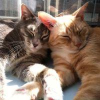 Siblings: Finn & Loïe
