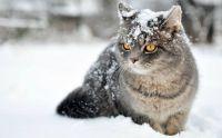 Cica a hóban