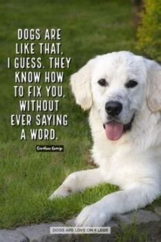 Dogs are like that (Medium)