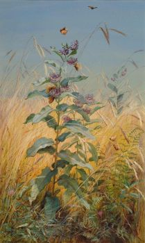 Fidelia Bridges (American painter) 1834 - 1923 Milkweeds, 1876
