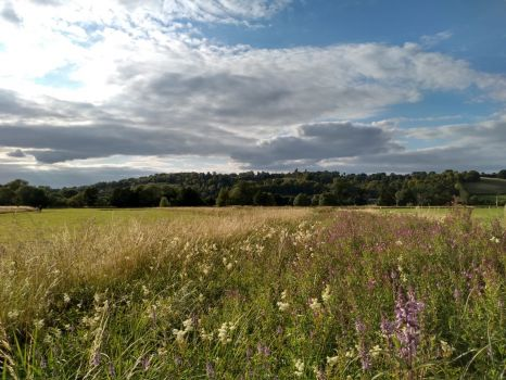 Pangbourne Meadows, Berkshire