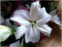 White flowers  -  Bílé květy