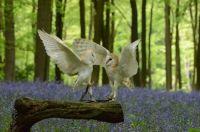Owl dance-off