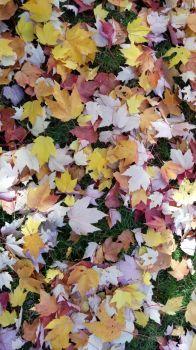 Fall Leaf Fall