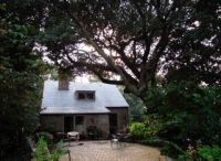 Old friends- much loved 1930's cottage under an old live oak