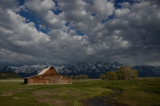 Yellowstone 8