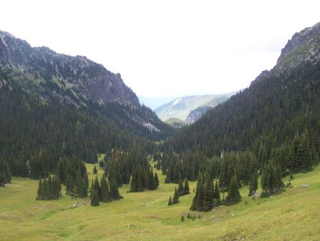 Mt Rainier NP--Berkely Park hike