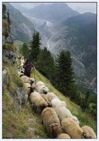Cesta na pastviny_Road to pasture