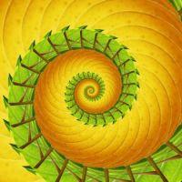 Spiral 03 Medium