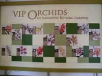 VIP  Orchids