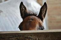 peek-a-boo :)