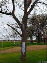 The Jump Rope Tree, Preston, Iowa.
